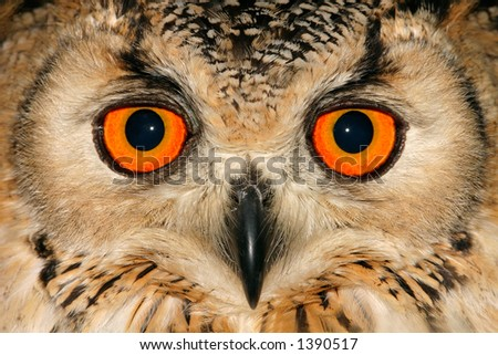 Close-up portrait of an owl with large orange eyes - stock photo