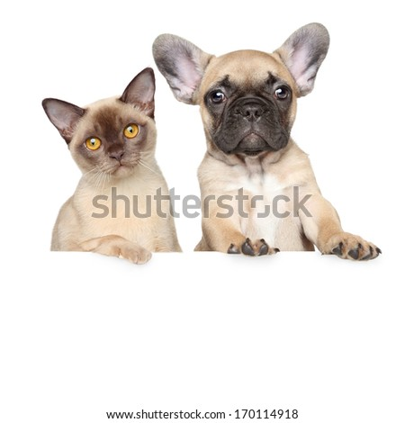 Close-up portrait of cat and dog on a white banner - stock photo