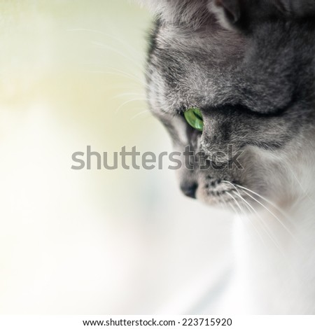 Close up portrait of cat with green eyes - stock photo