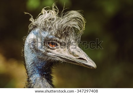 Close up Portrait of Emu  - stock photo