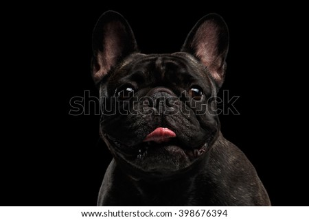 Close-up Portrait of Funny French Bulldog Dog and Curiously Looking in Camera, Front view,  Isolated on black background - stock photo
