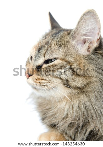 Close-up portrait of green-eyed Siberian cat. looking away. isolated on white background - stock photo