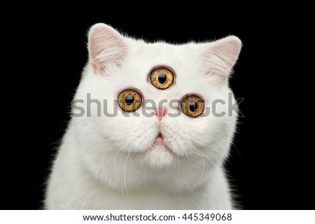 Close-up Portrait of predictor Pure White Exotic Cat with Three eyes Head, Isolated Black Background, Front view, Curious fascinated Looks, third eye on forehead - stock photo