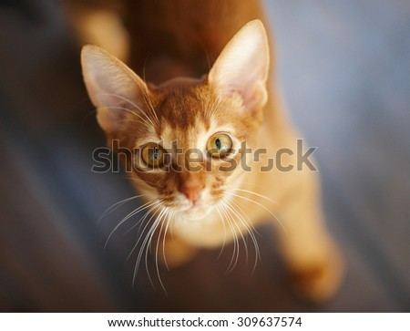 Close up portrait of red cat. - stock photo