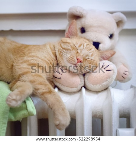 Close up portrait of sleeping ginger cat with Teddy bear