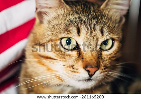 Close Up Portrait Peaceful Tabby Male Kitten Cat - stock photo