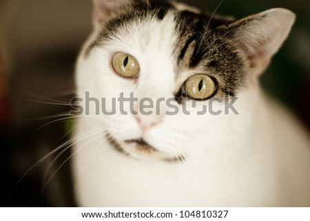 close up portrait shot of a pet cat, not really looking all cute and cuddly more like it's seen something it wants