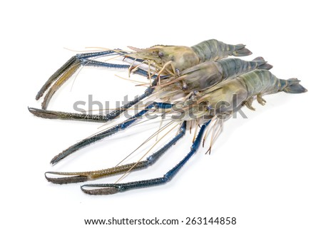 Close up prawn or raw shrimp on  white background