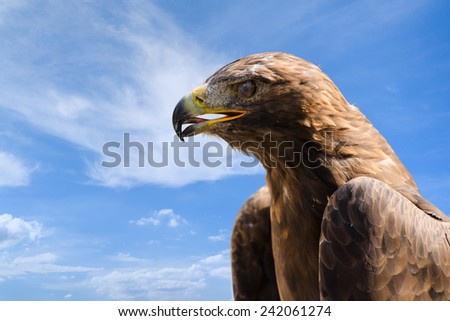 Close-up profile portrait of big golden eagle against deep blue sky as background with free place for copyspace your text - stock photo
