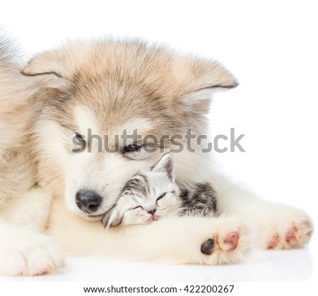 Close up puppy with sleepy kitten. isolated on white background
