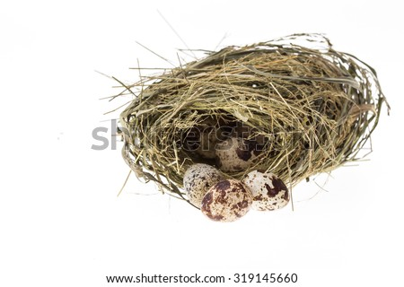 Close up quail eggs in nest isolated on white background - stock photo
