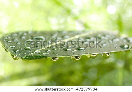 Close up rain water drop on tree leaf in green background marco