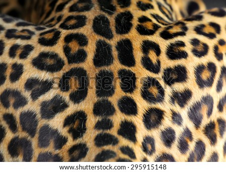 Close up real leopard skin texture for background - stock photo