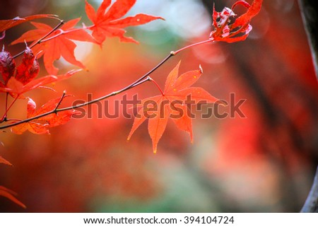 Close up red leafs with stunning background