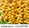 Close up Ripped date Fruits cluster hanging on a palm tree - stock photo