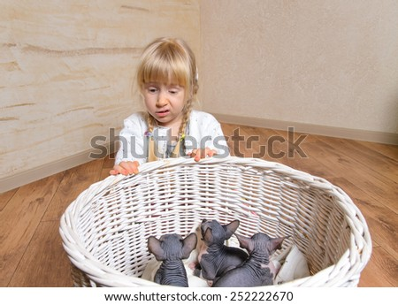 Close up Sad Blond Little Girl Behind a Basket of Sphynx Kittens Inside the House. - stock photo