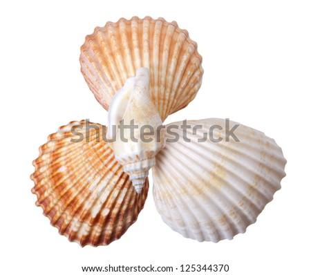 Close-up seashells on white background - stock photo