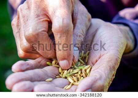 Close up seed on hand,Seeding,Seedling,Agriculture. rice seed  - stock photo
