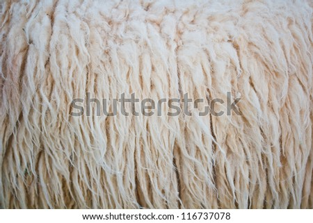 close up sheepskin texture background - stock photo
