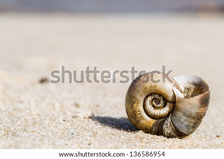Close-up. Shell on a sand of beach. - stock photo