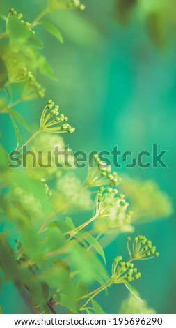 Close up shot of a branch with young leaves in spring.Shallow DOF and beautiful bokeh. - stock photo