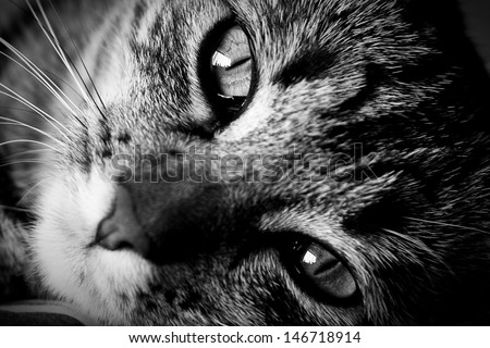 Close up shot of a cats face and eyes.