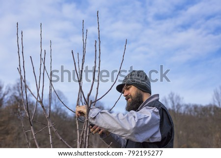Close up shot of a Caucasian man pruning fruit branches in his orchard on winter