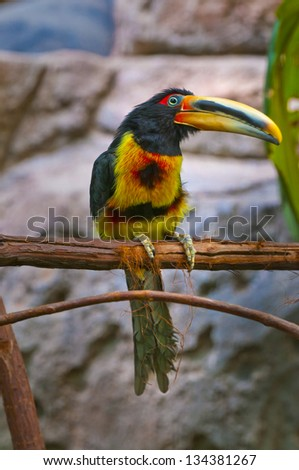 Close-up shot of a colorful bird sitting on the tree branch