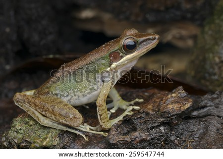 Close-up shot of a frog on a tree log - stock photo
