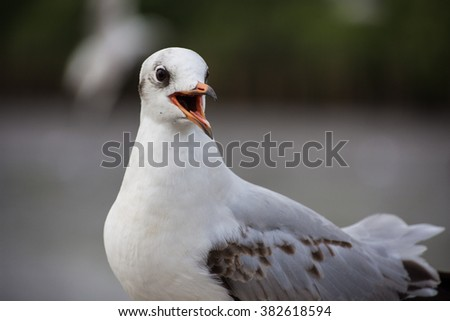 Close up shot of a seagull. - stock photo