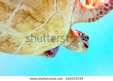 Close-up shot of a turtle under water, shallow focus - stock photo