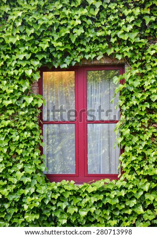 Close up shot of a window surrounded with green leaves of a creeper vine plant - stock photo