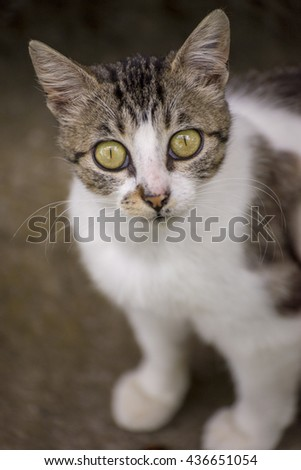 Close up shot of a young cat looking up towards camera
