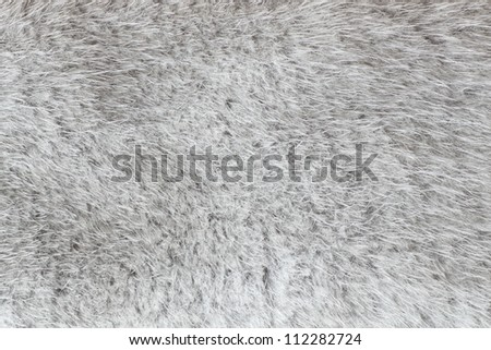 close-up shot of abstract fur bachground (texture) - stock photo