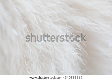 close up shot of abstract white fur background