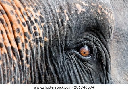 Close-up shot of Asian elephant eye - stock photo