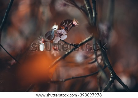 Close up shot of beautiful wild tree blossoms on natural light and with selective focus. Short depth of field for dreamy soft background.