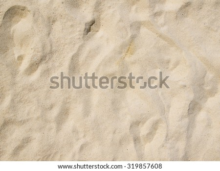 Close up shot of coral sand
