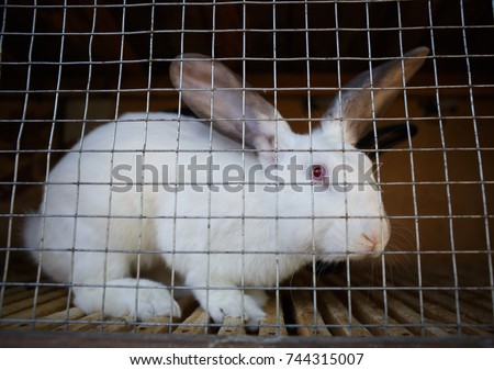 Rabbit Stock Images Royalty Free Images Amp Vectors