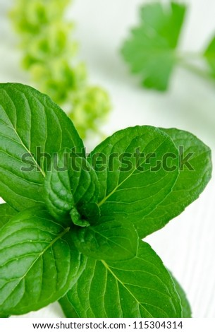 Close-up shot of fresh spearmint on white kitchen table - selective focus - stock photo