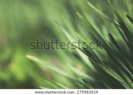 Close up shot of grass on a lawn. Bright and vibrant green summer or spring image. Very shallow depth of field - stock photo