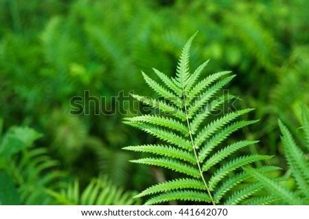 Close up shot of green leaf nature background