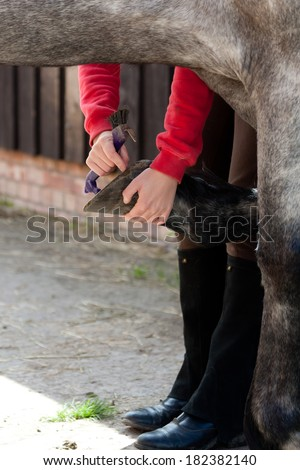 Close up shot of horse having its hoofs picked out in preparation for riding. - stock photo