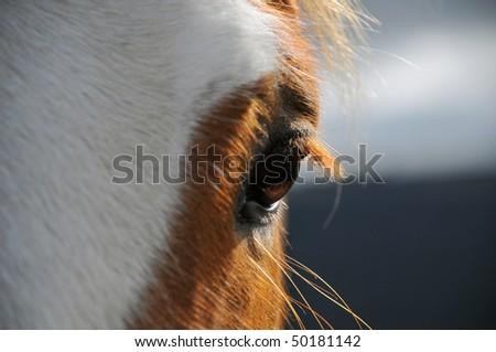 Close up shot of horses eye - stock photo