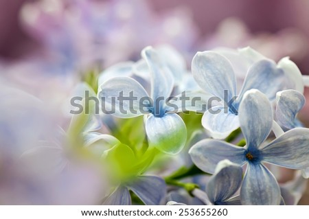 Close-up shot of lilac flowers on blurred background. Shallow depth of field. - stock photo