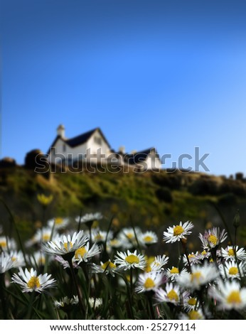 close up shot of several daisies and the house