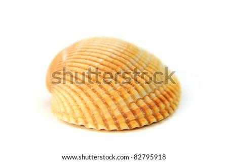 Close up shot of single sea shell on white background - stock photo