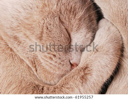 close up shot of sleepy cat - stock photo