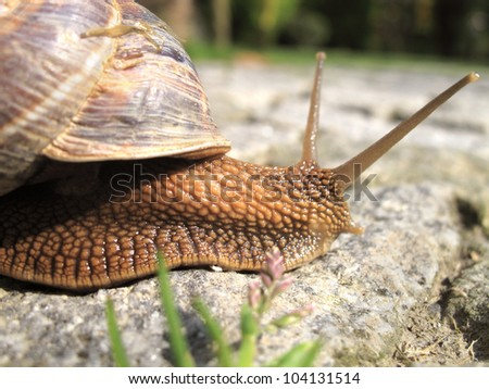 close up shot of snail on the road - stock photo