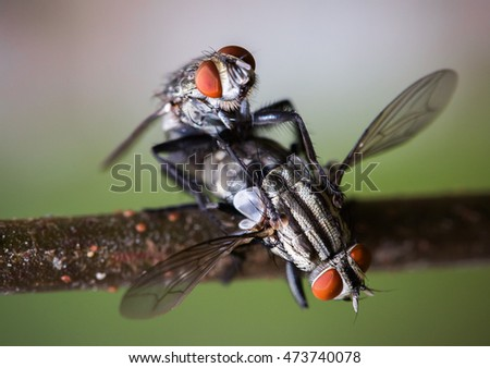 Close - Up Shot Of Two Flies Mating